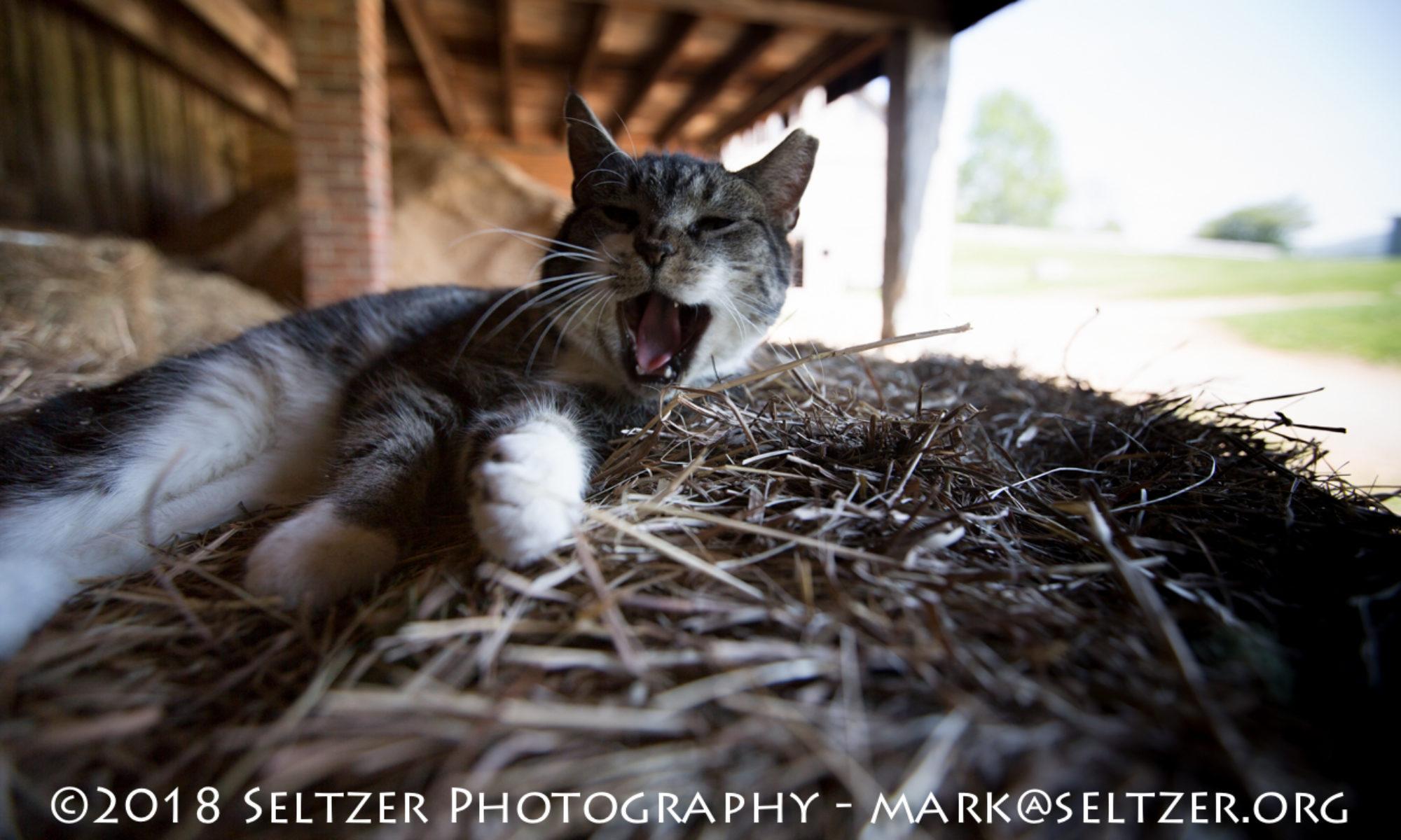 Mark Seltzer Photography
